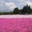 富士本栖湖リゾートの芝桜